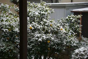20181209 Snow 2.jpg