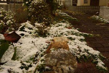 20181215 Snow.jpg